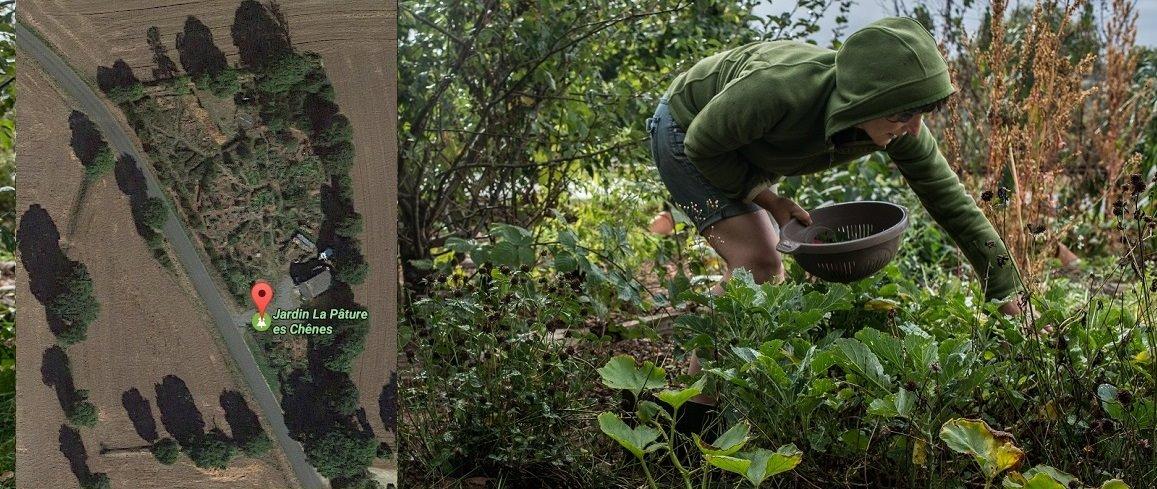 Le Jardin Un Modèle De Jardin Forêt Conçu Avec La